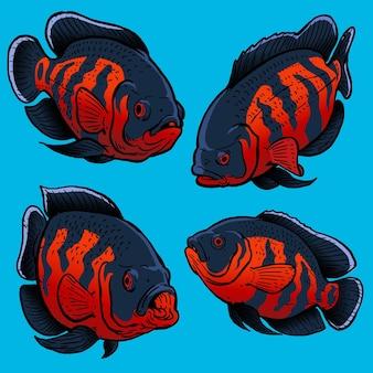 Set von tiger oscar fischen für die wildfischsammlung