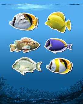 Set von unterwasserfischen
