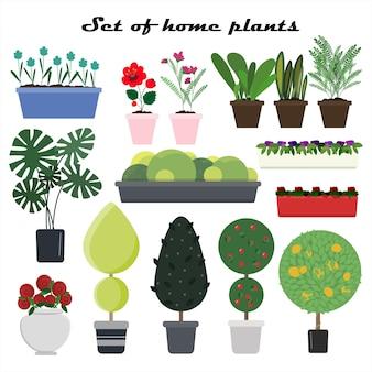 Set von vektorpflanzen in töpfen für zu hause flache illustration verschiedener arten von blumenbäumen