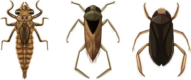 Set von verschiedenen arten von käfern und käfern