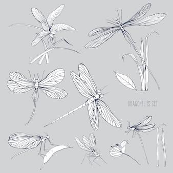 Set von verschiedenen libellen in verschiedenen posen. monochromer handgezeichneter sammlungsflieger. illustration.