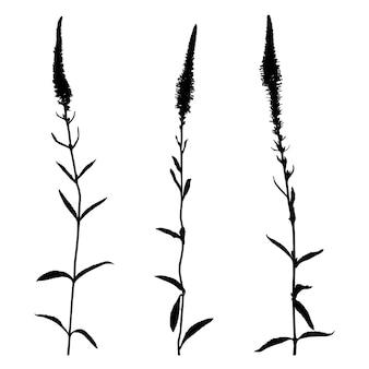 Set von wildblumen-silhouetten auf weißem hintergrund. sammlung von wiesenblumen. vektor-illustration.