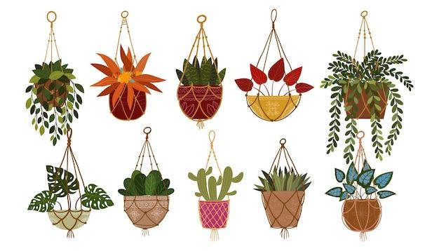 Set von zimmerpflanzen, die an seilillustration hängen zimmerpflanzen für die inneneinrichtung zu hause oder im büro