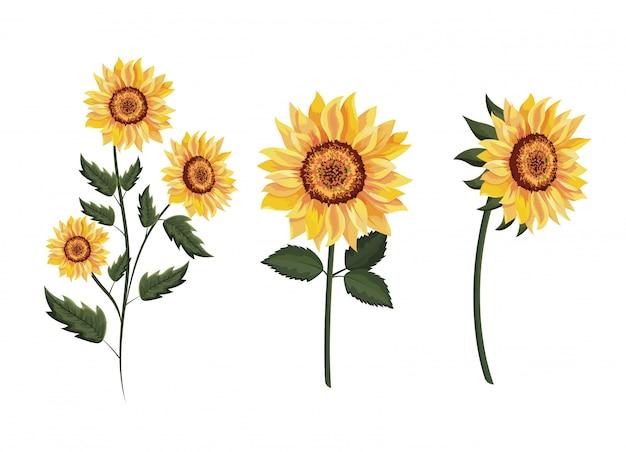 Setzen sie exotische sonnenblumenpflanzen mit blättern