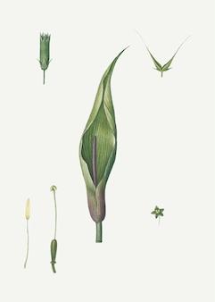 Sezierte blume und pflanze