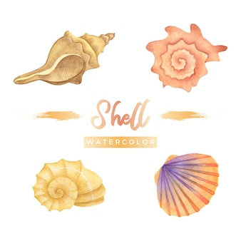 Shell aquarell design illustration