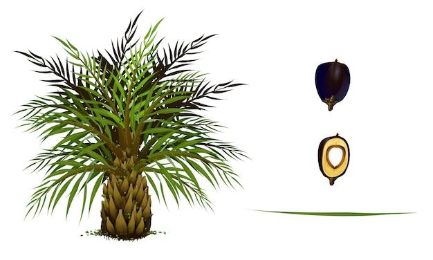 Siebesatz der palme und der blätter auf weißem hintergrund.
