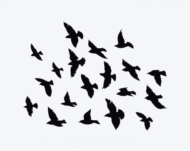 Silhouette eines vogelschwarms. schwarze konturen fliegender vögel. fliegende tauben.