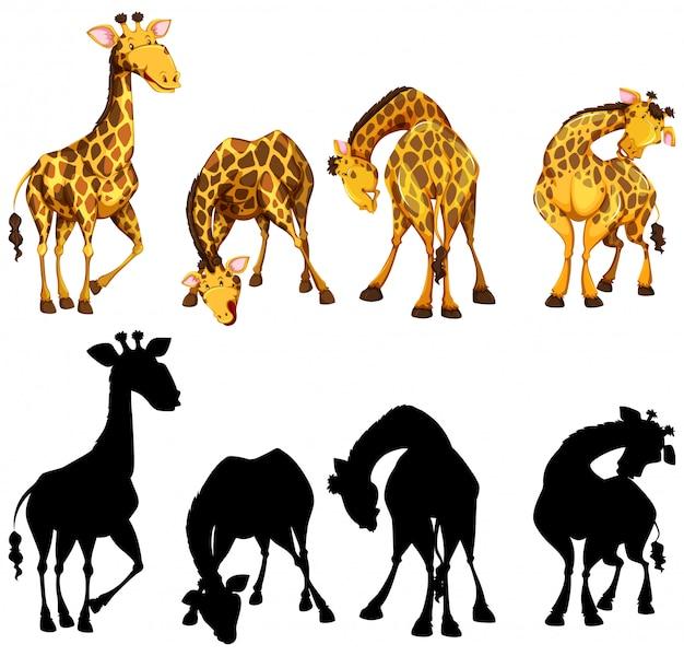 Silhouette, farbe und umrissversion von vier giraffen