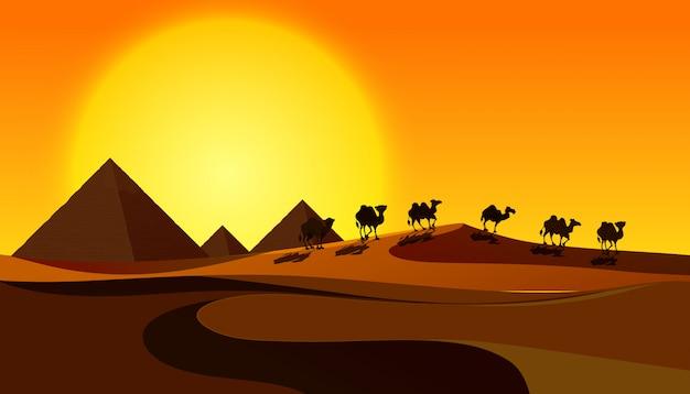 Silhouette kamele in wüstenszene
