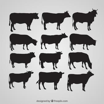 Silhouetten von kuh
