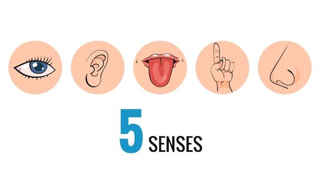 Sinnesorganen. nasengeruch, augensehen, ohrenhören, hautberührung, sprachgeschmack und geschmacksknospen.