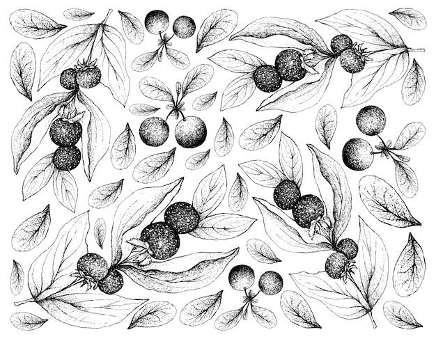 Skecth-hintergrund von ceylon-stachelbeeren und sumpf-heidelbeeren