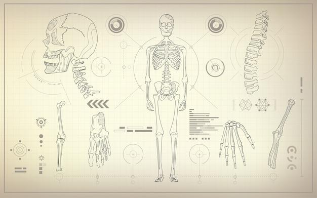 Skelett blaupause