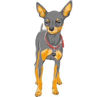 Sketch dog chihuahua rasse
