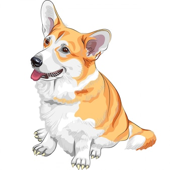 Sketch dog pembroke welsh corgi lächelnd