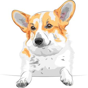 Sketch dog pembroke welsh corgi lächelnd