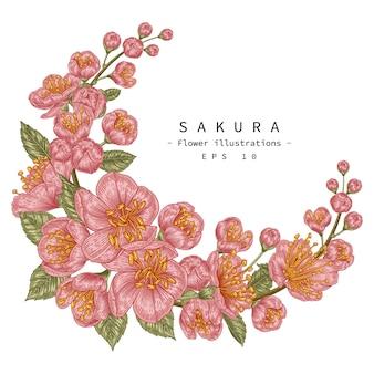 Skizze blumen dekoratives set. kirschblütenblumenzeichnungen.
