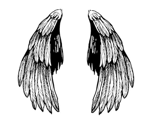 Skizze der flügel. hand gezeichnete illustration lokalisiert auf weiß