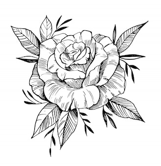 Skizze der rose. hand gezeichnete kontur