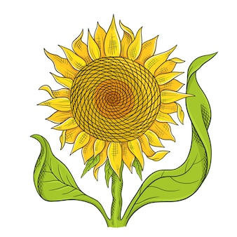 Skizze der sonnenblumenblumenzeichnung. gelbe blume mit grünen blättern.