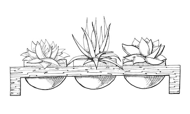 Skizze von drei sukkulenten in töpfen auf einem holzständer. illustration eines skizzenstils.