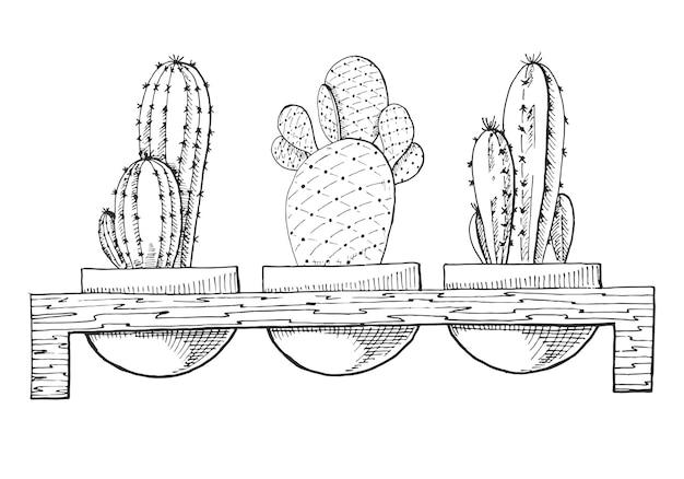 Skizze von drei sukkulenten in töpfen auf einem holzständer