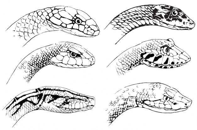 Skizze von schlangen