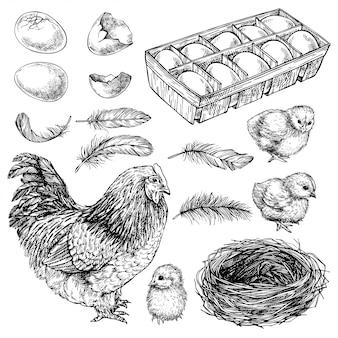 Skizzen-set aus henne, küken und eiern. hand gezeichnetes realistisches huhn. gravierte grafische illustration der tinte des kleinen vogels, des huhns und der eier.