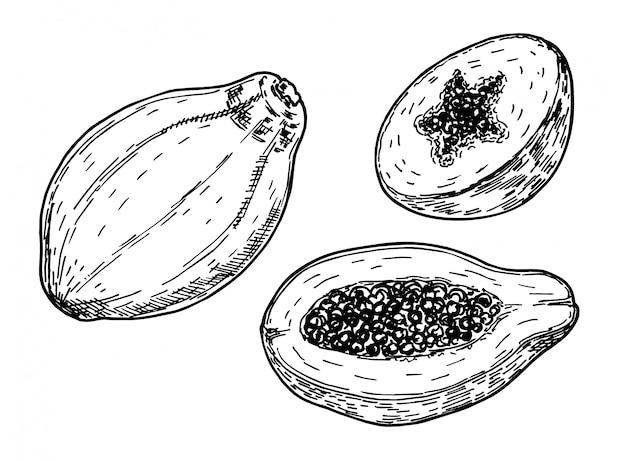 Skizzenzeichnung illustration der papaya auf weißem hintergrund. hand gezeichnete tropische fruchtillustration. ganze und geschnittene papaya
