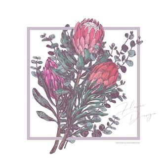 Skizzenzeichnungstrauß der tropischen exotischen blumen protea und eukalyptusillustration