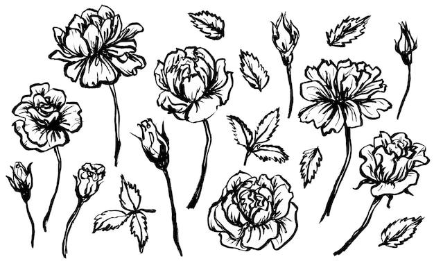 Skizzieren sie blumen. blätter, pflanzen. handgezeichnete vektor-illustration. monochrome schwarz-weiß-tinte. strichzeichnungen. isoliert auf weißem hintergrund. malvorlagen.