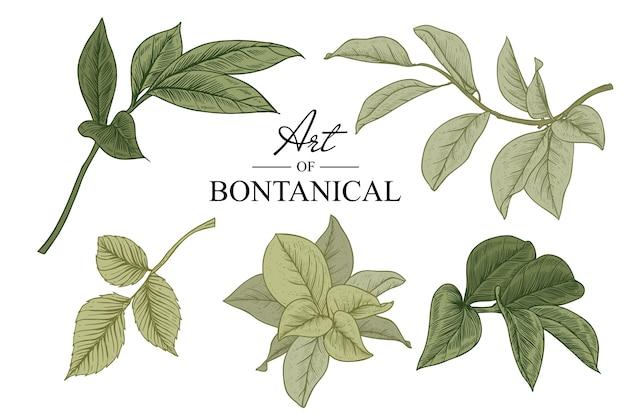 Skizzieren sie botanik.