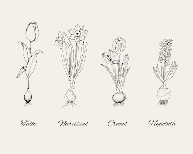 Skizzieren sie botanische natürliche pflanzen, die mit frühlingsblumen auf grau gesetzt werden