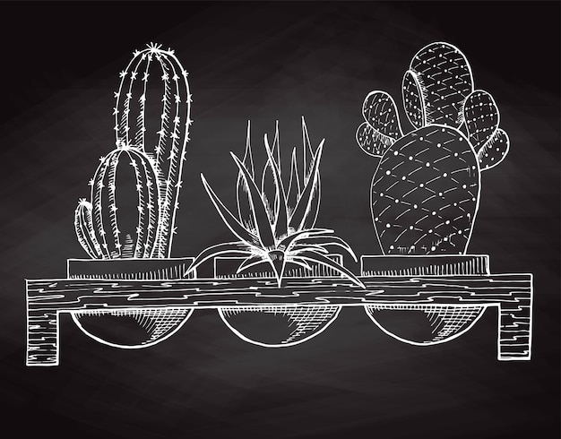 Skizzieren sie drei sukkulenten in töpfen auf einem holzständer, der auf der tafel isoliert ist. vektor-illustration.
