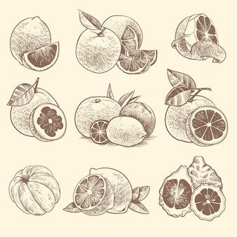 Skizzieren sie zitrusfrüchte. orangen, zitronen und grapefruit, limette. zitrusfrüchte und blüten mit blättern. hand gezeichneter vintage botanischer vektorsatz