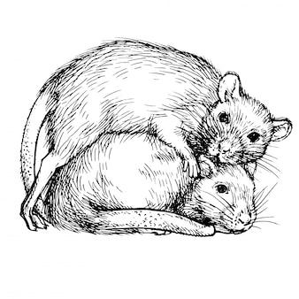 Skizzieren sie zwei ratten. ein paar ratten.