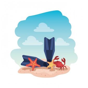 Sommer flip flops und krabben mit seestern