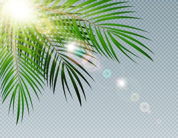 Sommerzeit-palmblatt mit sonnenstrahl auf transparentem hintergrund