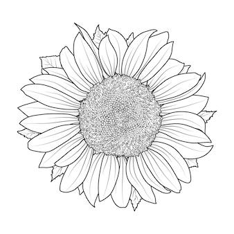 Sonnenblume für malbuch