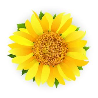 Sonnenblume getrennt auf weißem hintergrund