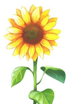 Sonnenblume im aquarellstil