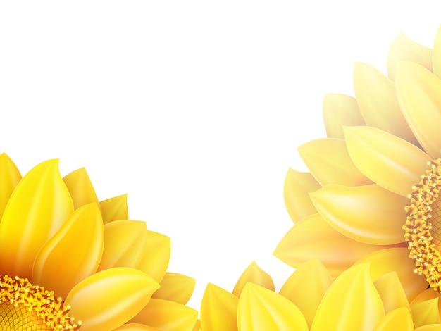 Sonnenblume lokalisiert auf weißem hintergrund.