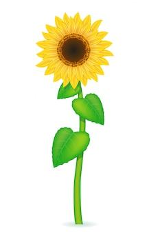 Sonnenblume-vektor-illustration