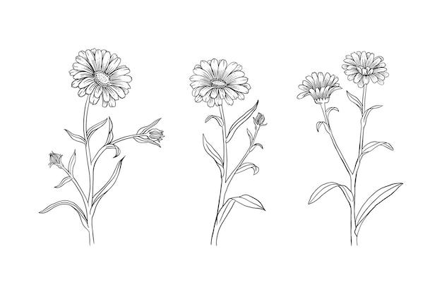 Sonnenblumen set. hand gezeichnete illustration