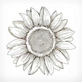 Sonnenblumen-skizze, handzeichnung, illustration