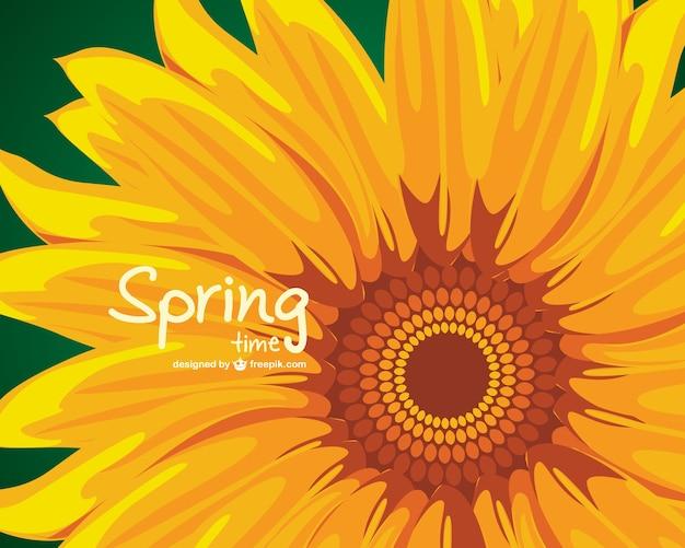 Sonnenblumen-vektor-illustration