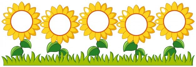 Sonnenblumengarten mit schreibfläche