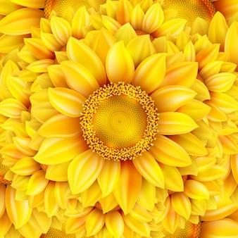 Sonnenblumenhintergrund