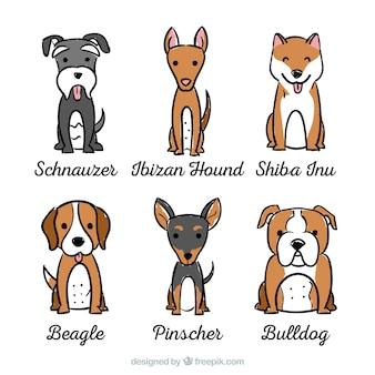 Sortiment von hunden mit sechs verschiedenen rassen